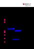 Vorschaubild der DateiKVRLP_Ort_sucht_Arzt_Leitfaden.pdf